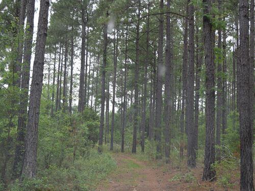 Trophy Buck Hunting Warwick, Ga : Warwick : Worth County : Georgia