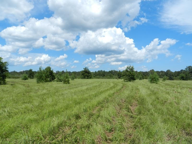 59 Ac. Country Home Site Near Perry : Perry : Houston County : Georgia