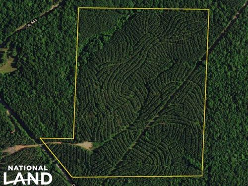 County Road 25 Timber Investment : Heflin : Randolph County : Alabama