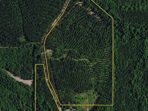 Chambers County Timber Investment : Roanoke : Chambers County : Alabama