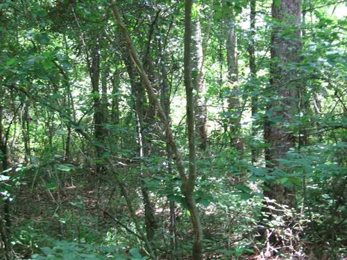 Small Acreage With Pond : Canton : Madison County : Mississippi