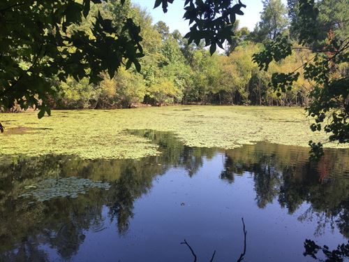 12.89 Ac With Small Pond-Reduced : Lizella : Bibb County : Georgia