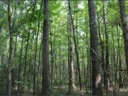 116 Acres In Newton County : Newton : Mississippi