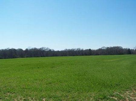 Farmland Or Development : Ellaville : Schley County : Georgia