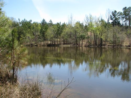 Dixon Mills 100 Ac With Pond : Dixon Mills : Marengo County : Alabama