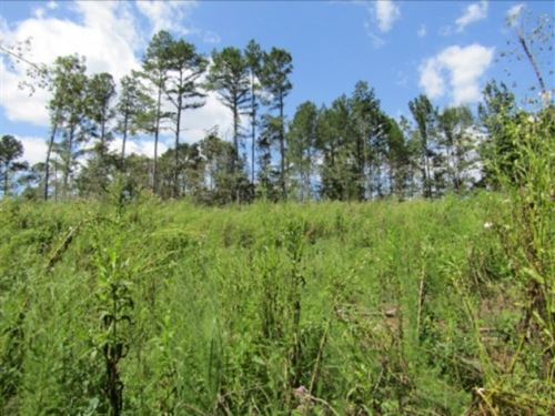 28 Acres In Holmes County : Midway : Holmes County : Mississippi