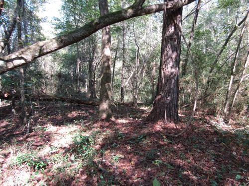 70 Acres In Neshoba County, Ms : Madden : Neshoba County : Mississippi