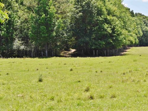 Pasture Hunting Timber Creek Land : Fayette : Jefferson County : Mississippi