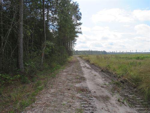 Cane Branch Tract : Walterboro : Colleton County : South Carolina