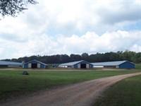 Northeast Georgia Poultry Farm : Maysville : Jackson County : Georgia