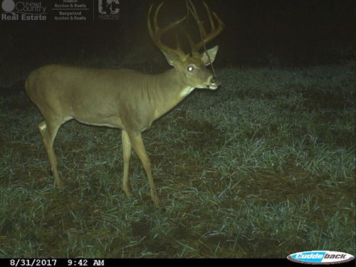 Central Wisconsin 110 Acres Of Hunt : Westfield : Marquette County : Wisconsin
