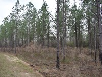 66-082 Buckhorn Creek Tract : Annemanie : Wilcox County : Alabama