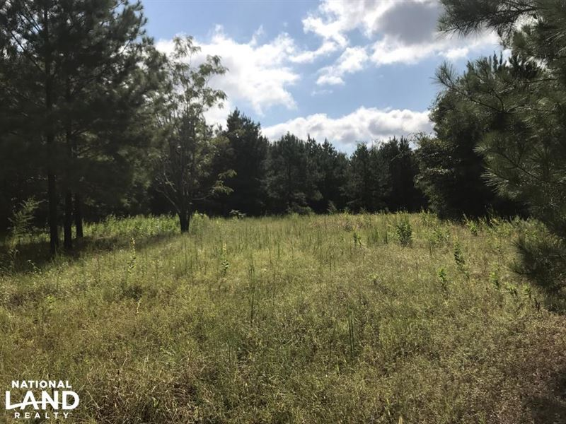 Lee Creek Hunting And Timber Tract : Repton : Conecuh County : Alabama