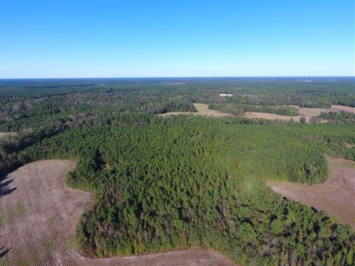 Murfield Tract : Branchville : Dorchester County : South Carolina