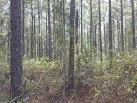 Prime Timber And Great Hunting : Colquitt : Miller County : Georgia