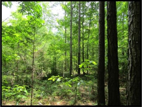 370 Acres In Jasper County : Rose Hill : Jasper County : Mississippi