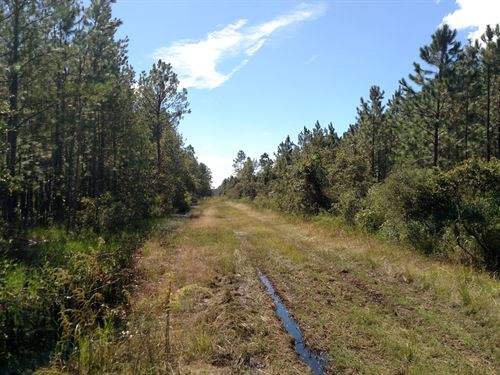 Timber Investment W Of Palatka : Palatka : Putnam County : Florida