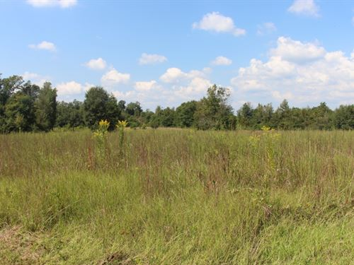 36 Acres In Clarke County, Ms : Vossburg : Clarke County : Mississippi