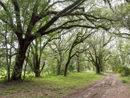 Beautiful Plantation Home With Land : Quitman : Brooks County : Georgia