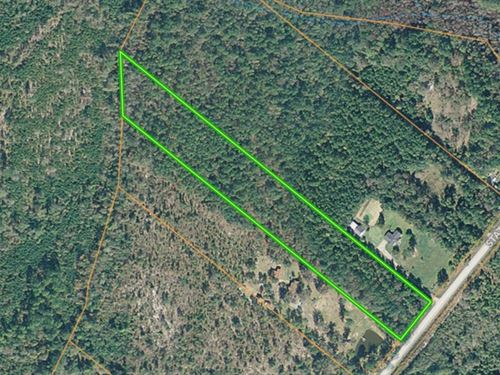Marlboro County Sc Wooded Acreage : Wallace : Marlboro County : South Carolina