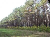 207 Acre, Hunting & Investment : Sandy Hook : Walthall County : Mississippi