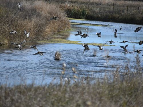 Cedar Creek Waterfowl Mecca : Sterling : Logan County : Colorado