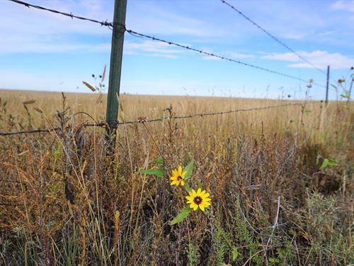 Peaceful 40 Acre Homesite East Of : Rush : El Paso County : Colorado