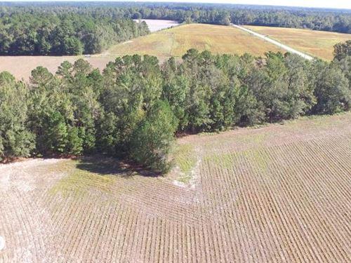 Roundabout Farming And Hunting Trac : Darlington : South Carolina
