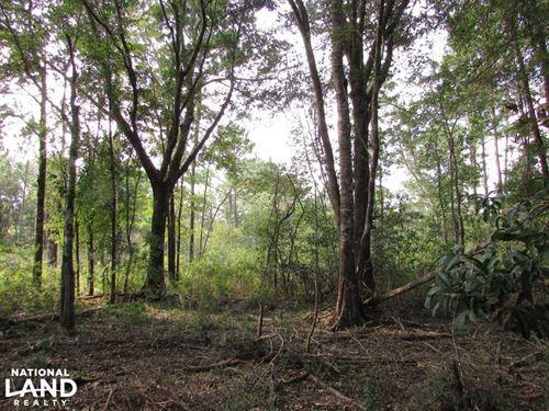 102 Acre Hunting / Timber Land : Morgan : Calhoun County : Georgia