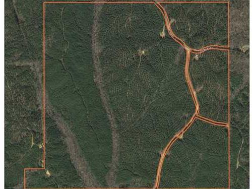 364 Acres on CR 5226 in Baldwyn, MS : Baldwyn : Prentiss County : Mississippi