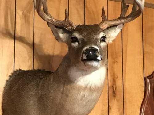 93 Acres Tilda Jane Lane : Graham : Young County : Texas