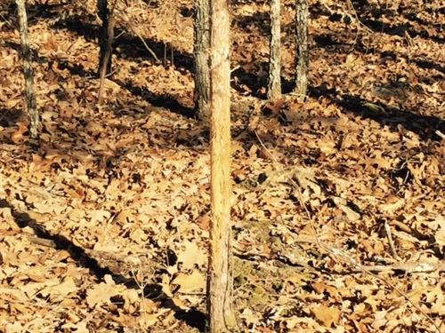 Reduced, 120 Acres Hunting Land : Quincy : Hickory County : Missouri