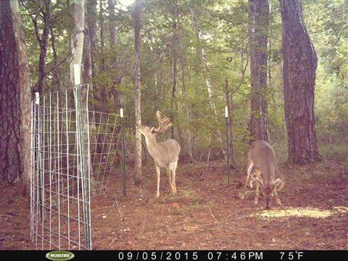 Dry Branch Property : Albany : Dougherty County : Georgia
