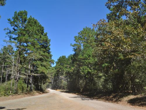 488 Ac Tract 4174 County Rd 255 : San Augustine : Texas
