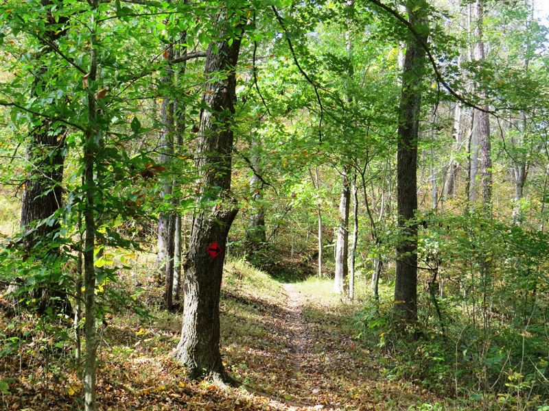 Unique Large Timberland Tract : Land for Sale : Eleanor : Putnam County :  West Virginia