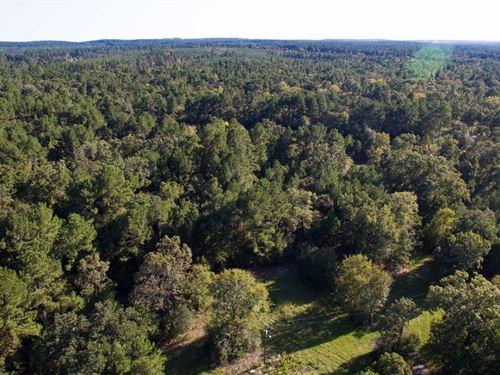 8.97 Ac Tract 2 Cedar Ridge Rd : Huntsville : Walker County : Texas