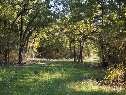 8.11 Ac Tract 13 Cedar Ridge Rd : Huntsville : Walker County : Texas