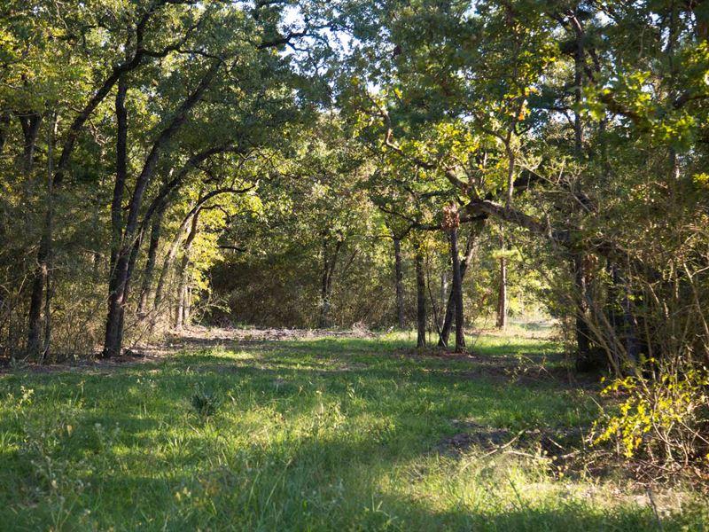 8.35 Ac Tract 14 Cedar Ridge Rd : Huntsville : Walker County : Texas
