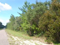 Over Half An Acre Corner Lot : Citrus Spring : Citrus County : Florida