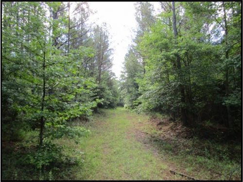 285 Acres In Montgomery County : Kilmichael : Montgomery County : Mississippi