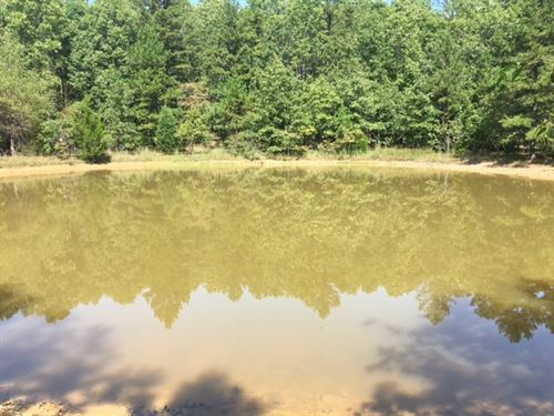 Marketable Timber : Summersville : Shannon County : Missouri