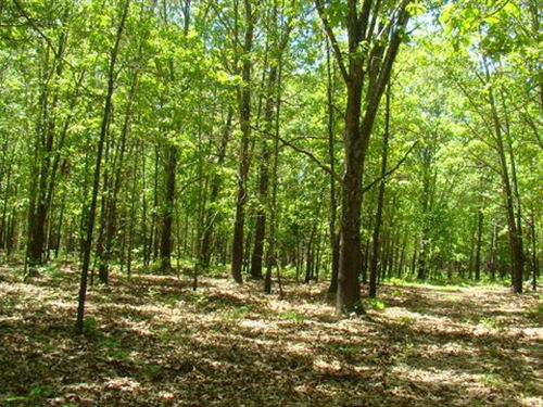 Mostly Wooded : Willow Springs : Howell County : Missouri