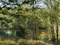 24 Acres in Sharon, York County : Sharon : York County : South Carolina