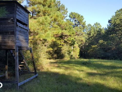 32 Acre Hunting And Recreational Ge : Livingston : Polk County : Texas