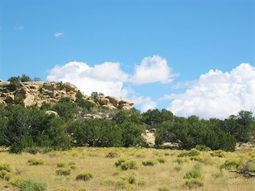 Arizona's Best Wilderness Ranch : Saint Johns : Apache County : Arizona