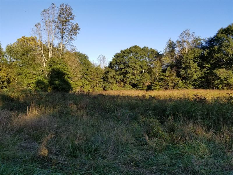 53 52+/- Acre Mixture, Woods & Farm : Land for Sale : Whitwell : Marion  County : Tennessee