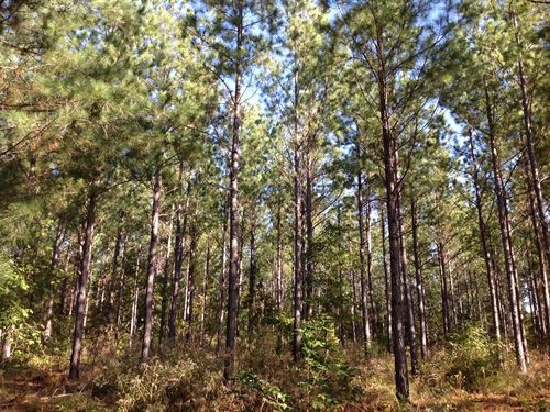 Timber Investment & Hunting Land : Jemison : Chilton County : Alabama