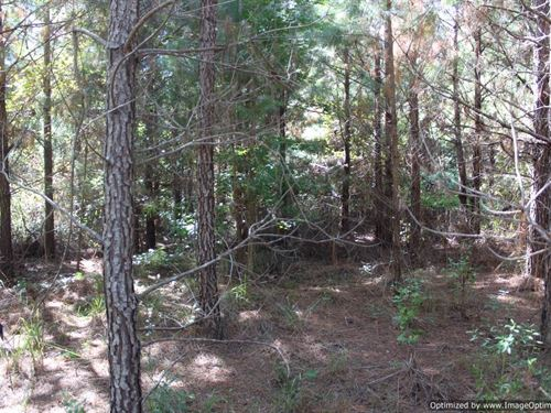 Hunting And Timber Tract : Hazlehurst : Copiah County : Mississippi