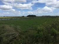 1495 Acres Improved Pasture : Arcadia : De Soto County : Florida