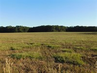 40 Acres Of Open Land : O'brien : Suwannee County : Florida